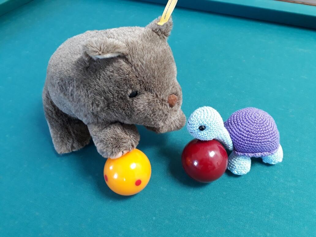 Wombat meets turtle